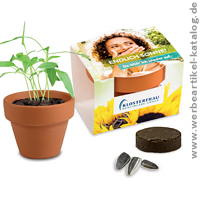 pflanzen werbeartikel f r wachsenden erfolg mit sonnenblumen oder weiteren werbemittel samen. Black Bedroom Furniture Sets. Home Design Ideas